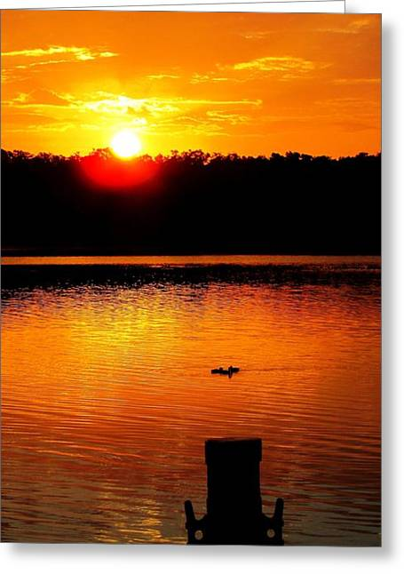 Sunset And Ducks Greeting Card by Will Boutin Photos