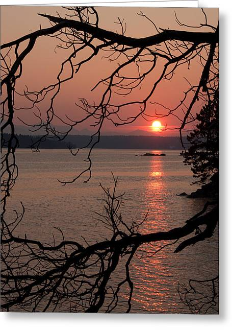 Sunset And Madrona Tree Greeting Card by Kasandra Sproson