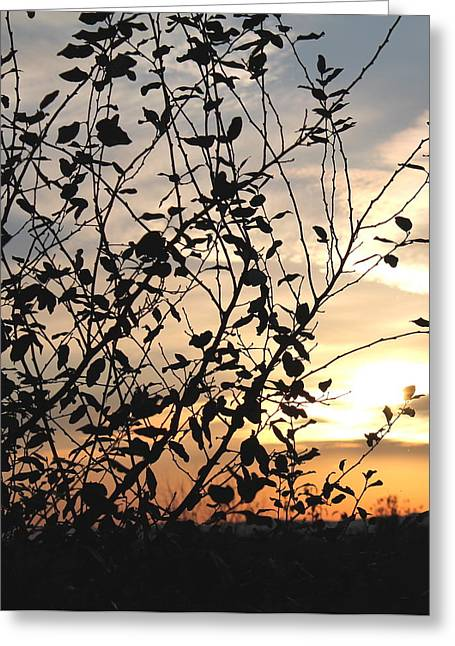 Greeting Card featuring the photograph Sunset And Nature's Silhouette by Candice Trimble