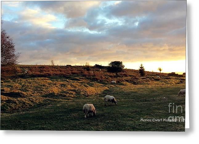 Sunset And Sheep Greeting Card by Merice Ewart