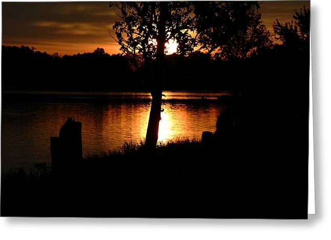 Sunset And Tree Greeting Card