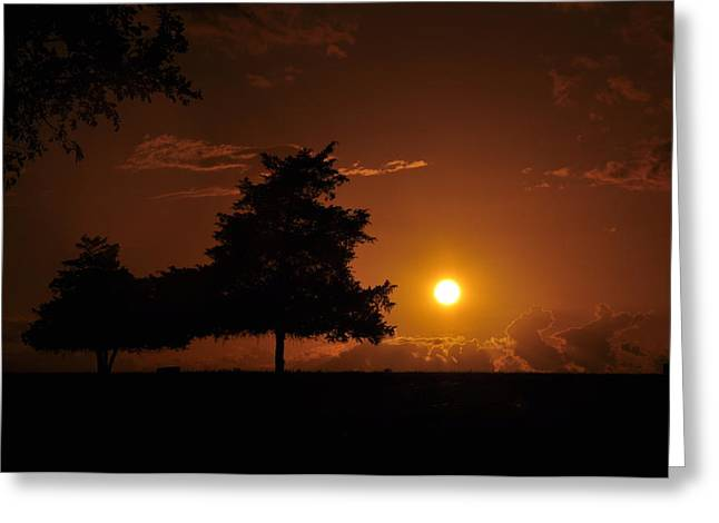 Sunset And Trees Greeting Card by Cherie Haines