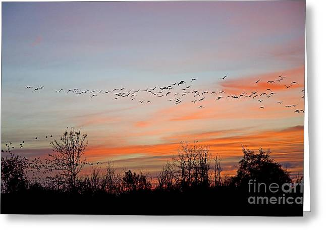 Sunset At Ankeny Wildlife Refuge Greeting Card by Nick  Boren