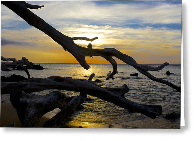 Driftwood At Sunset On Beach '69 Greeting Card by Venetia Featherstone-Witty