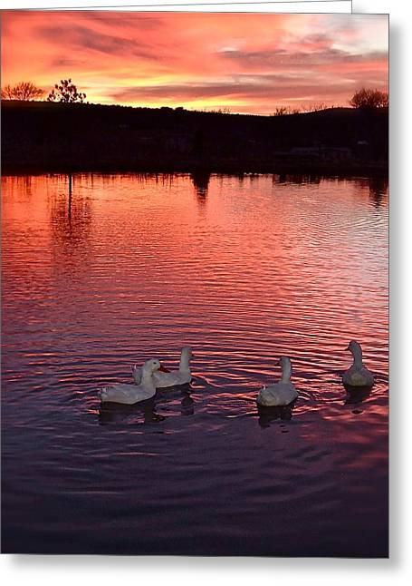 Sunset At Duckpond Greeting Card by Kim Pippinger