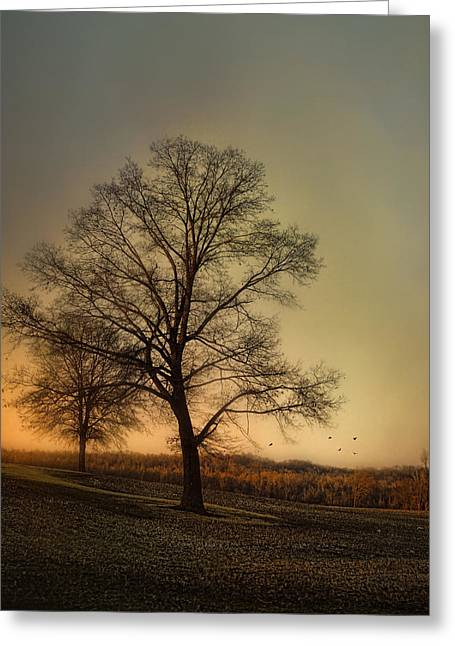 Sunset At The Cotton Field Greeting Card by Jai Johnson