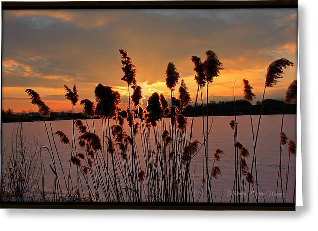 Greeting Card featuring the photograph Sunset At The Pond 3 by Michaela Preston