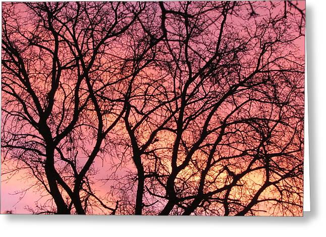 Sunset Behind The Trees Greeting Card by Debra Madonna