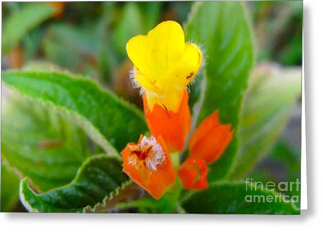 Sunset Bells Flower Greeting Card by Lanjee Chee