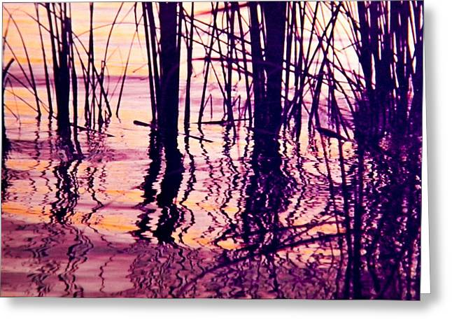 Sunset Cattails Greeting Card