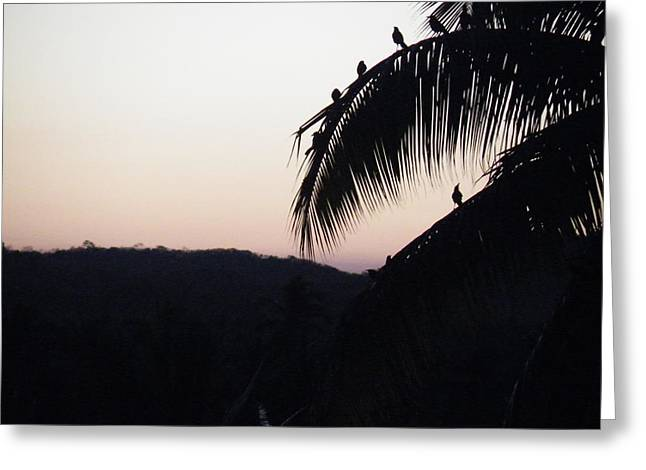 Greeting Card featuring the photograph Sunset Chorus by Brian Boyle
