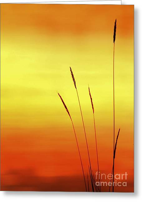 Sunset Greeting Card by Christopher Mace