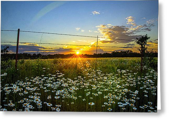 Sunset Daisies Greeting Card by Jean Hutchison