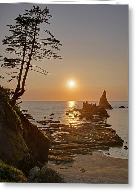 Sunset De Agave Greeting Card by Mike Reid