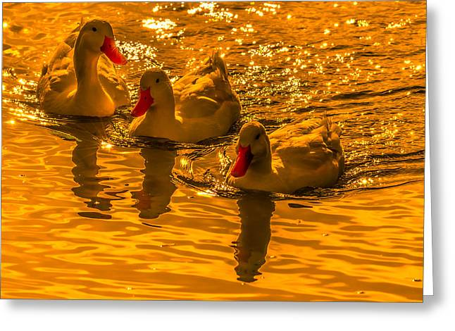 Sunset Ducks Greeting Card by Brian Stevens