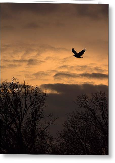 Sunset Eagle Greeting Card
