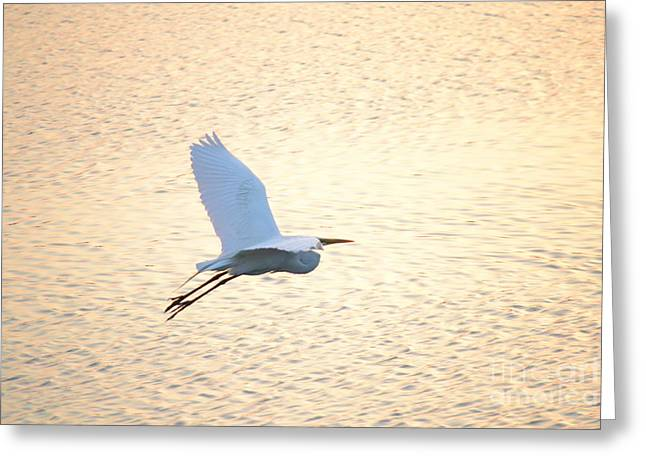 Greeting Card featuring the photograph Sunset Flight by Carol  Bradley