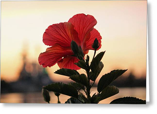 Greeting Card featuring the photograph Sunset Flower by Cynthia Guinn