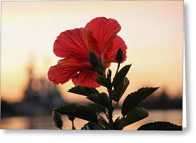 Sunset Flower Greeting Card by Cynthia Guinn