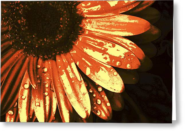 Sunset Flower Greeting Card by Kami McKeon