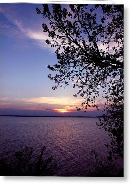Sunset From The Trees Greeting Card by Virginia Forbes
