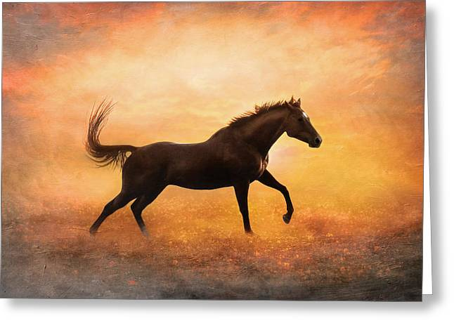 Sunset Gallop Greeting Card by Pamela Hagedoorn