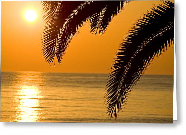 Sunset Golden Color With Palm Greeting Card