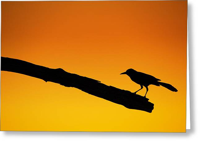 Sunset Grackle Silhouette Greeting Card by Andres Leon