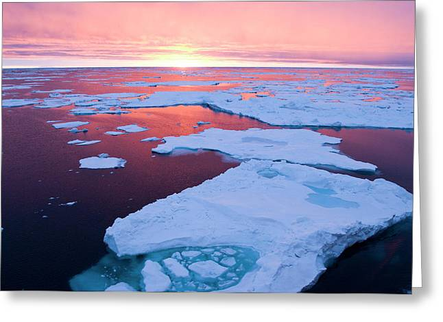 Sunset, Greenland Sea, East Coast Greeting Card by Daisy Gilardini