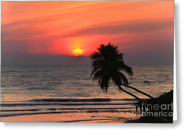 Sunset   Gulf Of Mexico   Naples  Florida Greeting Card