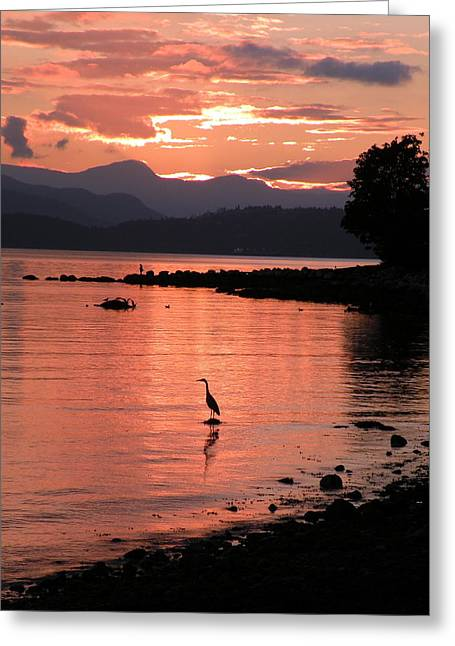 Sunset Heron Greeting Card by Brian Chase