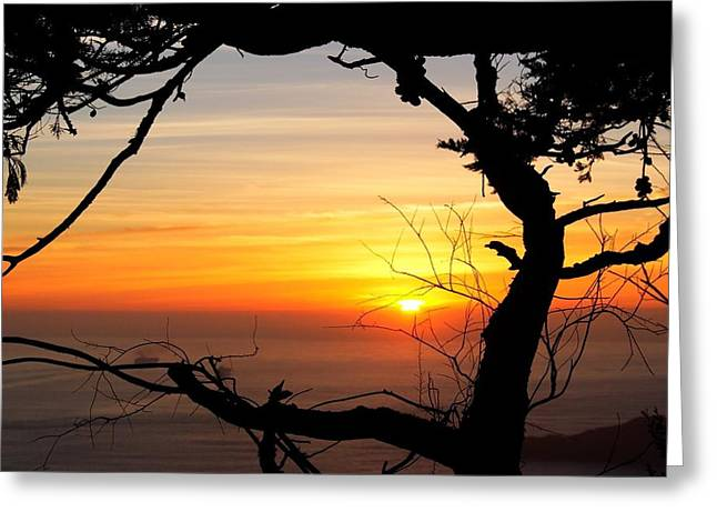 Sunset In A Tree Frame Greeting Card