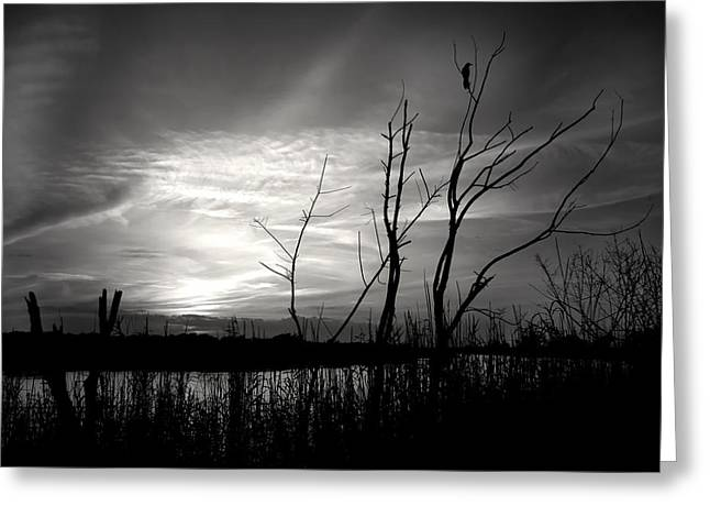Sunset In Black And White Greeting Card by Mark Andrew Thomas