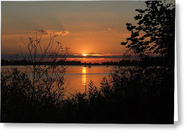 Sunset In Brush Greeting Card by Sheila Savage