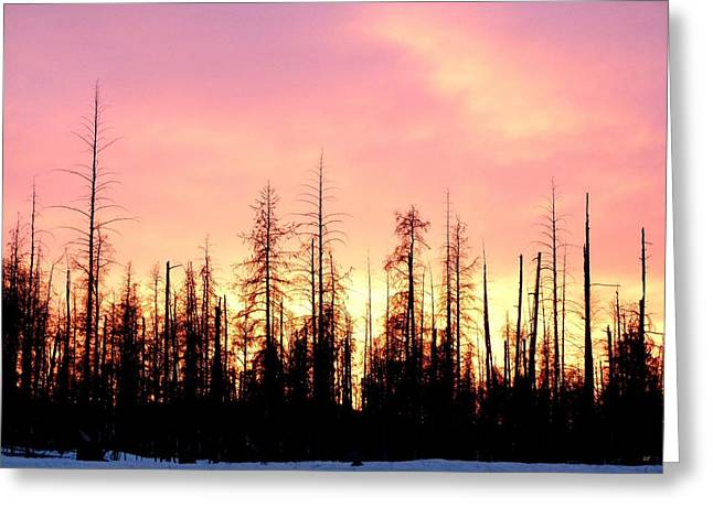 Sunset In Cariboo Country Greeting Card