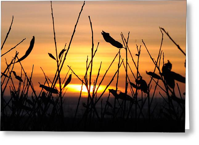 Sunset In Half Moon Bay Greeting Card