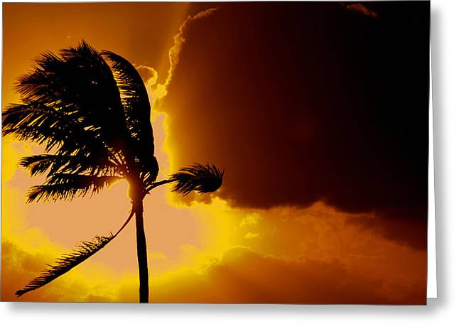 Sunset In Long Island Greeting Card by Victor Minca