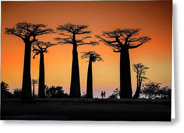 Sunset In Morondava Greeting Card