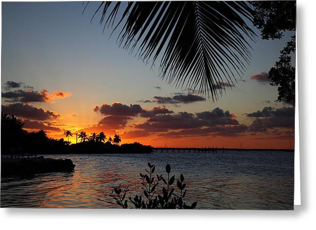 Sunset In Paradise Greeting Card by Michelle Wiarda