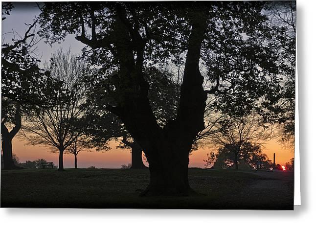 Sunset In Richmond Park Greeting Card by Maj Seda