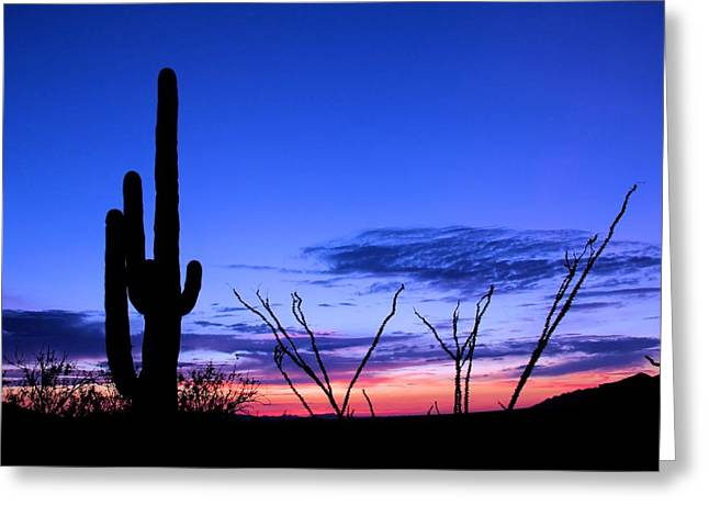 Sunset In Saguaro National Park Greeting Card by Elizabeth Budd