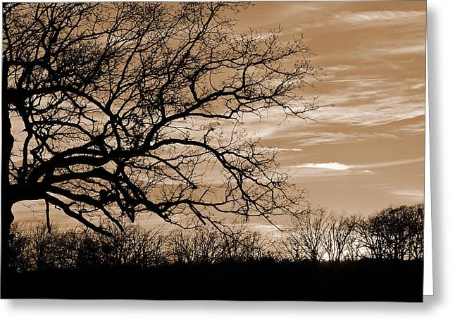 Sunset In Sepia C  Greeting Card