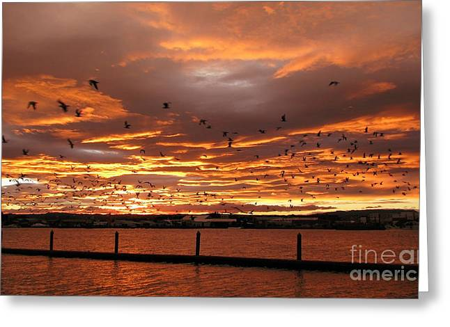 Sunset In Tauranga New Zealand Greeting Card