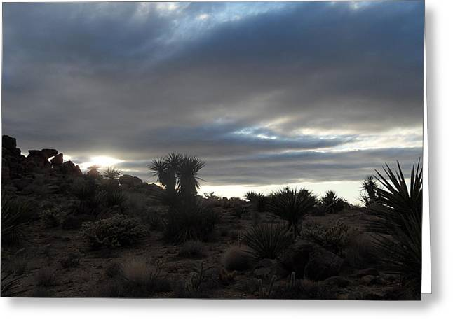 Sunset In The Desert Greeting Card by James Welch