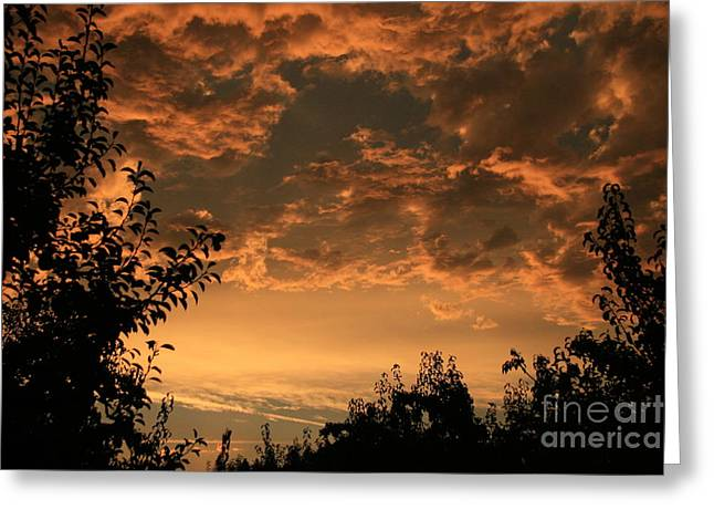Sunset In The Orchard Greeting Card by Cari Gesch