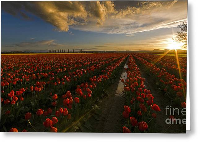 Sunset In The Skagit Valley Greeting Card