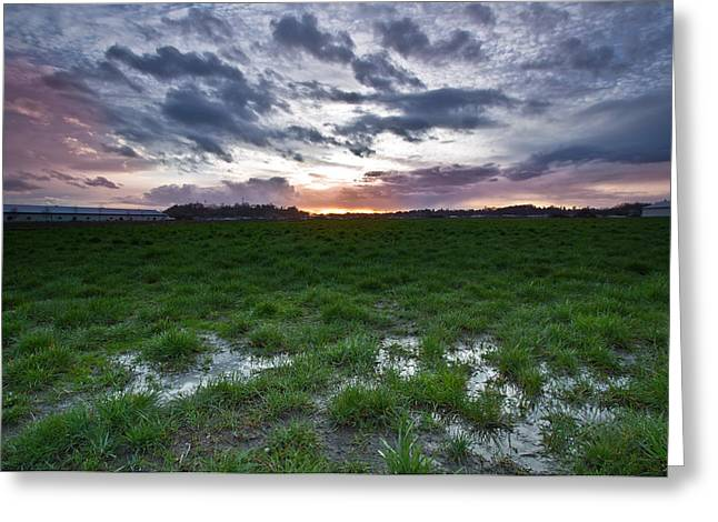 Sunset In The Swamp Greeting Card by Eti Reid