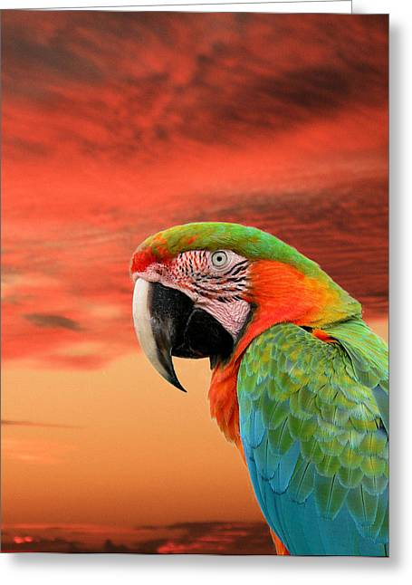 Sunset In The Tropics Greeting Card by Rosalie Scanlon