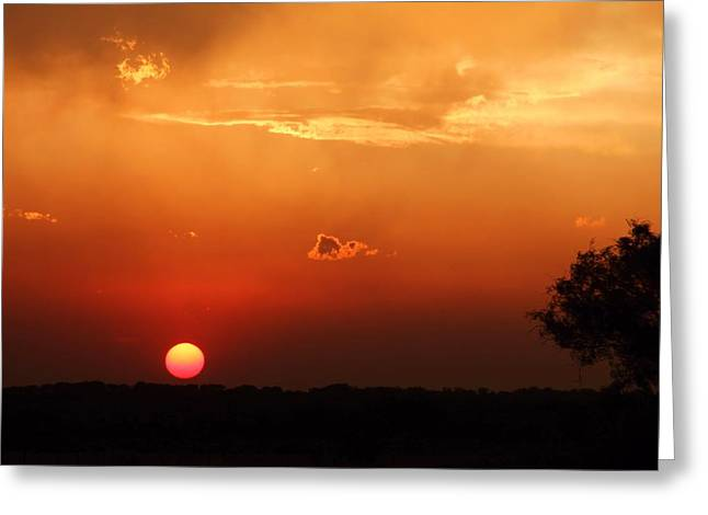 Sunset In West Texas Greeting Card by Elizabeth Budd