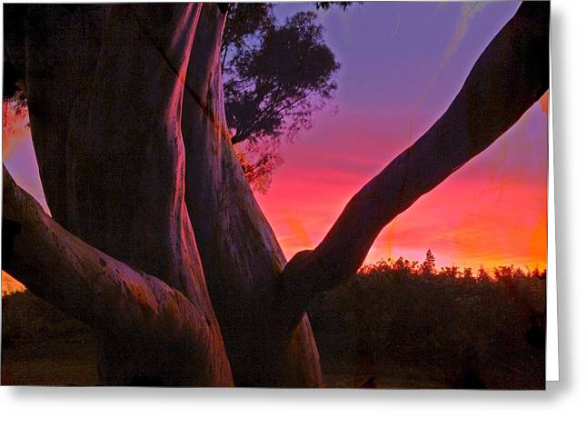 Sunset Madrone 3 Greeting Card